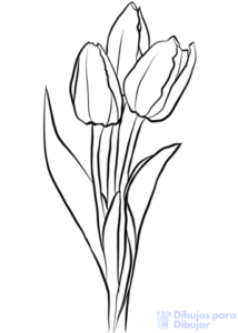 imagenes de flores tulipanes