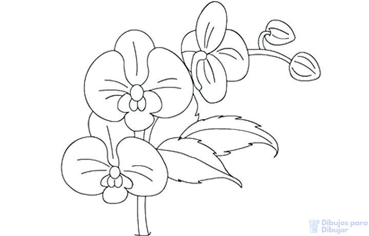 imagenes de la orquidea para colorear