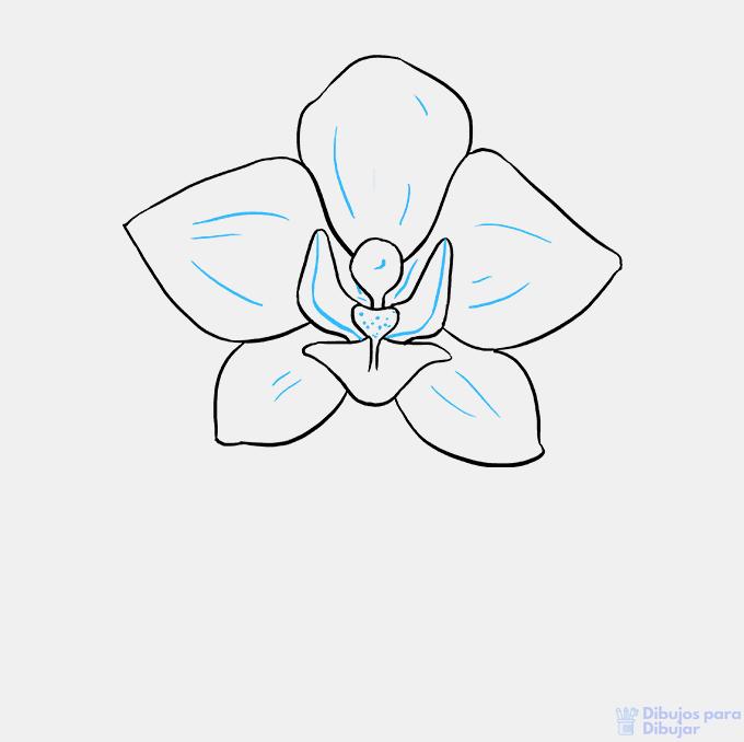 imagenes de la orquidea para dibujar