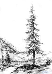 imagenes de pinos