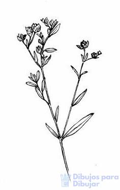 imagenes de plantas animadas