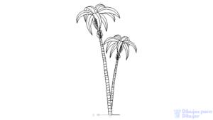 imagenes palmeras playa
