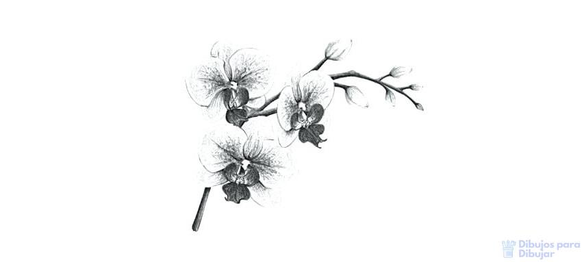 la orquidea para dibujar