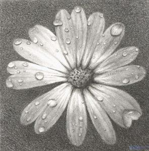laminas de flores margaritas