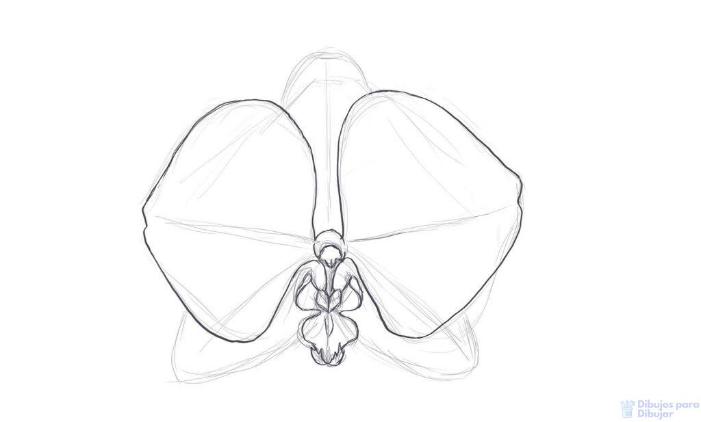 orquideas fotos variedades