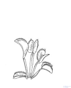 plantas carnivoras para dibujar
