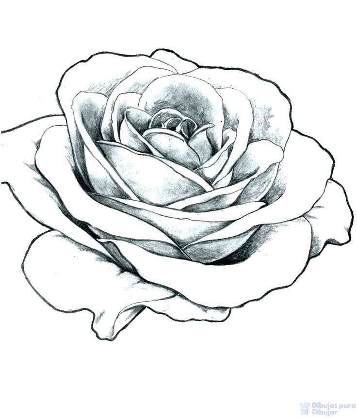 rosas animadas