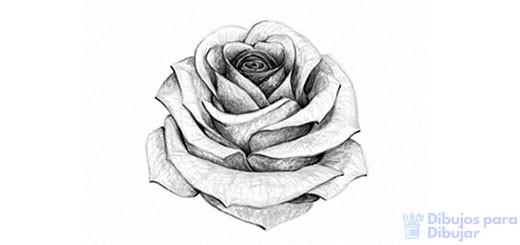 rosas para dibujar faciles