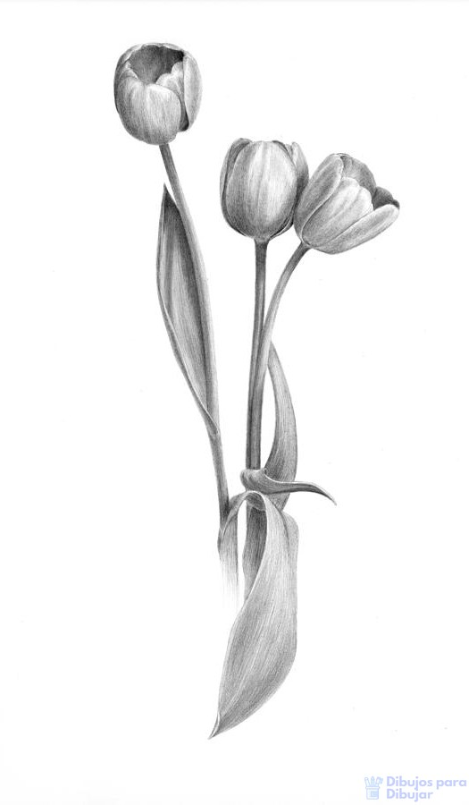 tulipanes animados