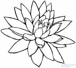 vector flor de loto